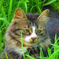 Мой котя. :: Татьяна ❧