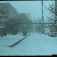 Зима :: Сурикат Сусликов