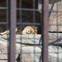 Минский зоопарк :: Ksy КорСор