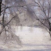 Среди деревьев :: Наталия Григорьева