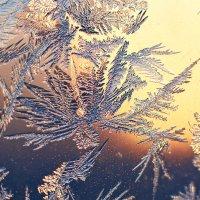 морозный цветок :: Седа Ковтун