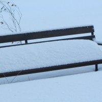 Снег. :: Прима Игорь Кондратьевич