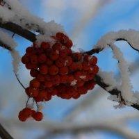 Морозная свежесть. :: Ирина Королева