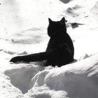 Черное на белом :: Алина
