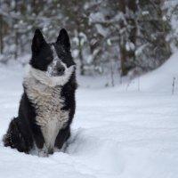Верный пес :: Светлана