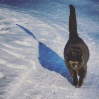 Кот,который гуляет сампо себе :: Елена Фалилеева-Диомидова