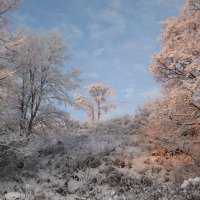 зимний пейзаж :: svetlana
