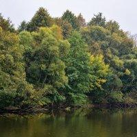 Есть в графском парке,Старый пруд........ :: Paparazzi