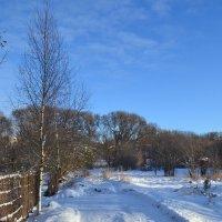 Мороз и солнце. :: zoja