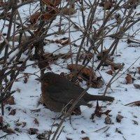 Холодно на снегу :: Nina Yudicheva