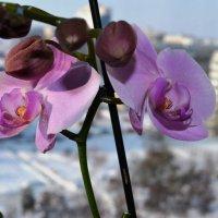 Орхидея :: Serg