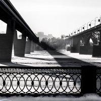 Чёрно-белая зима :: Сергей Добрыднев