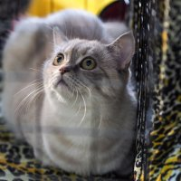 Выставка кошек :: Андрей Зайцев