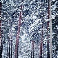Лесной пейзаж :: Марина Иванова
