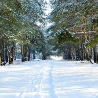 Зимний лес :: Наталья Величко