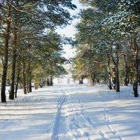 Зимний лес 2 :: Наталья Шелыганова