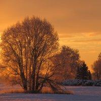 морозным утром ранним... :: Mariya laimite