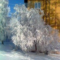 Зимушка зима. :: Андрей