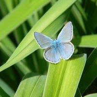 Бабочка :: Юлия Жогина