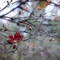 грустная осень :: Ирина Гракова