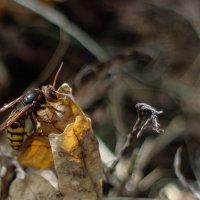пчелка :: Ирина Гракова