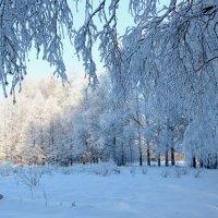 Мороз и солнце! :: Наталья Лунева