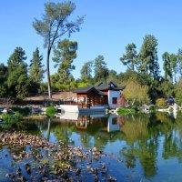 Японский сад :: Николай Танаев