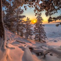 Лес на берегу Ладоги. :: Фёдор. Лашков