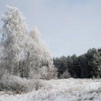 Белая береза :: Сергей Уральцев