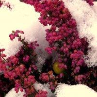 Зимние цветы.. :: Эдвард Фогель