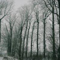 Зима) :: Alina Mazitova