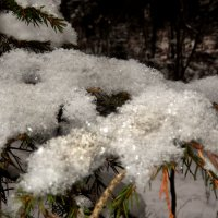Одела елочка зимы перчатку. :: Александр