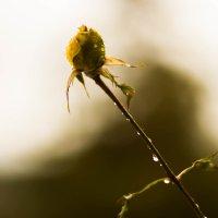 Цветок :: Елена Селина
