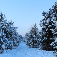 Сибирь :: Лариса