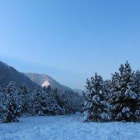 Морозное утро :: Лариса