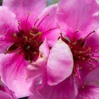 Воспоминания о весне 2015 :: Олеся Енина