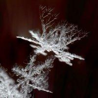 Снежные кораллы :: Тимофей Черепанов