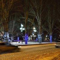 Стволы деревьев в Новогоднем оформлении :: Александр