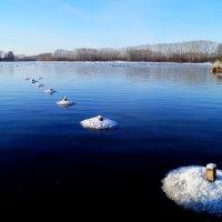 На озере :: Кристина Воробьева