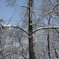 Зимний лес :: L A V