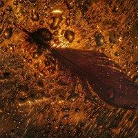 Прощание Феникса :: Ирина Сивовол