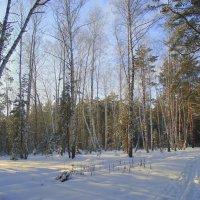Зимняя красота. :: Мила Бовкун