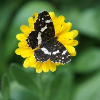 Бабочка :: Dmitry Utkin