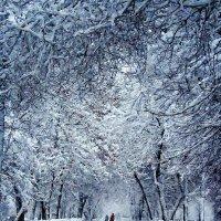 Зимняя аллея вся из серебра... :: Евгений Юрков