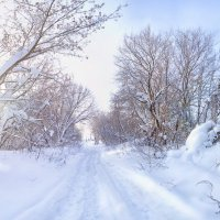 Зима во всей своей красе :: Наталья Петрова
