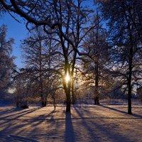 Зимнее солнце. :: Дарья Гречина