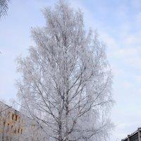 Серебряный убор деревьев в январе :: Светлана Ку