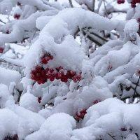 Снежная зима :: НикЛеод