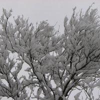 Снежность 1 :: Сергей Трусов