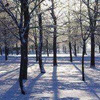 Утром в лесу :: Марина Сорокина